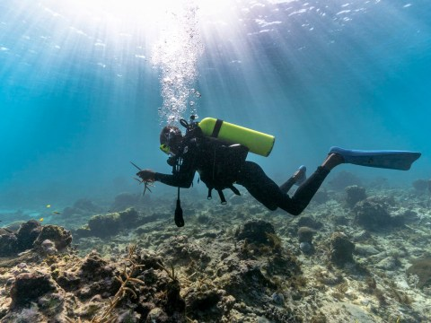Grassroots divers known as 'gardeners' are trying to save coral reefs
