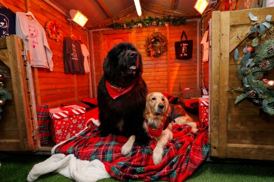 Dog guests attend the launch of Merry Mutts Motel at Westfield London