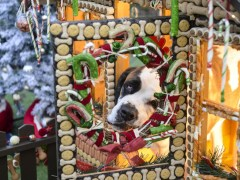 Rescue dogs treated to Christmas grotto that's totally edible
