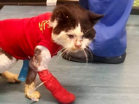 Crowdfunding has raised £6k to treat stray cat with feline HIV nicknamed 'Smelly Cat'