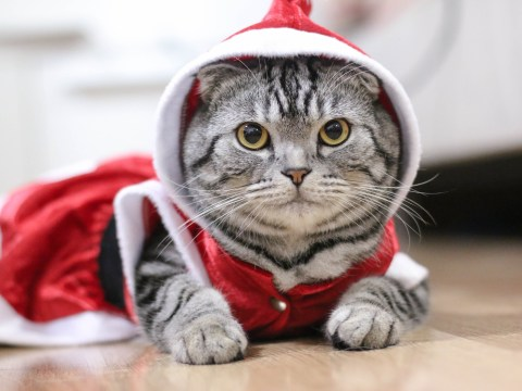 Why you shouldn't dress your cat in a festive outfit this Christmas