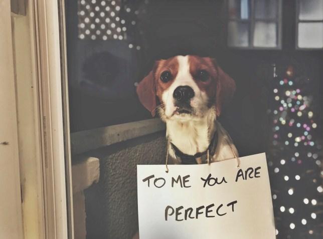 Bert the dog recreates Love Actually for Christmas card