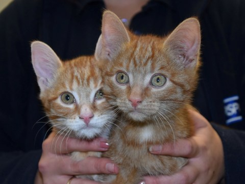 Kittens rescued after being found dumped in a recycling bin