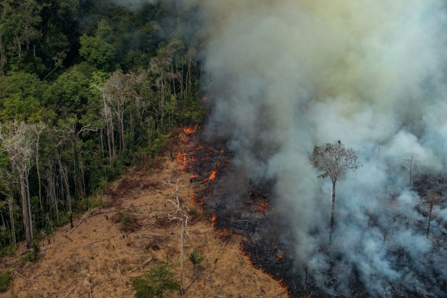 Aerial picture showing a patch of forest being cleared with fire in the municipality of Candeias do Jamari, close to Porto Velho in Rondonia State, in the Amazon basin in northwestern Brazil (Victor Moriyama/Greenpeace/AFP)