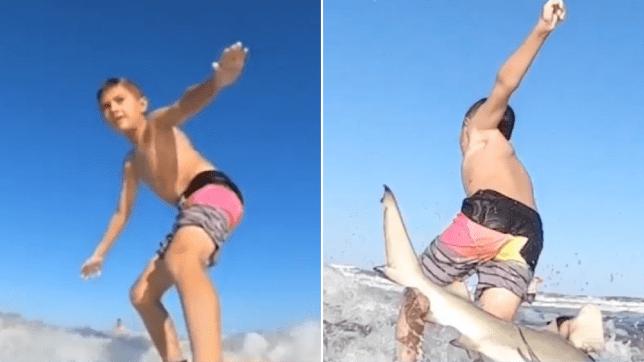 Shark, Shaun Moore, surf
