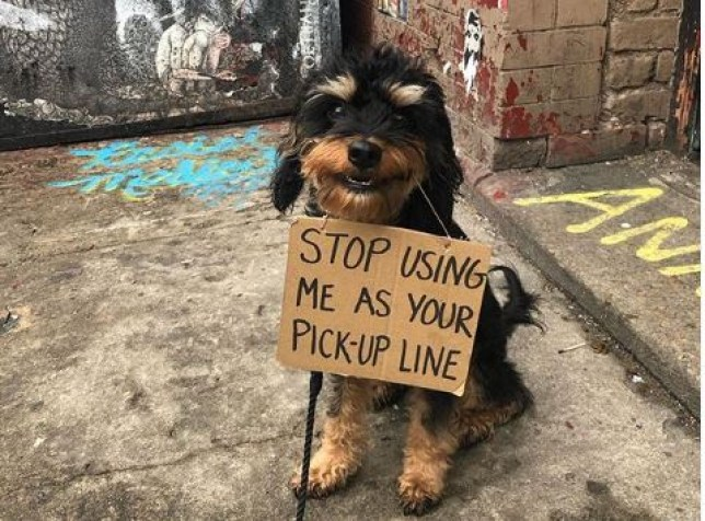 Dog holding a sign saying stop using me as your pick-up line
