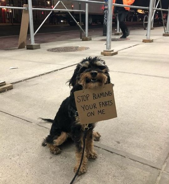Dog holding sign saying stop blaming your farts on me