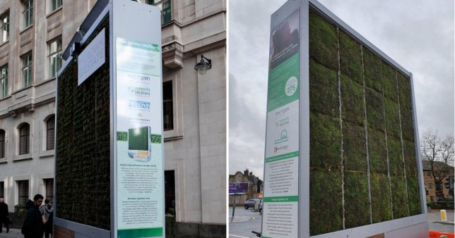 Anti-pollution city trees