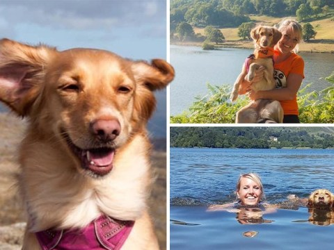 Dog tied to a lamppost and left for dead in Cyprus now has dream life in the Lake District