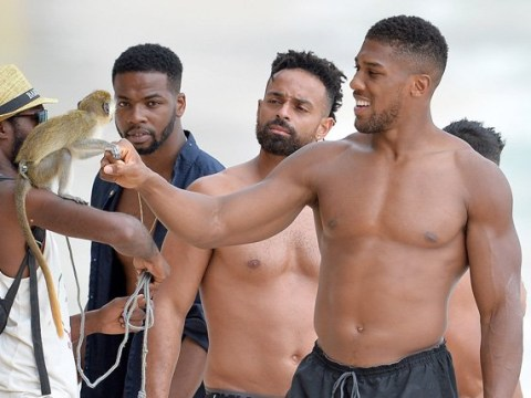 Anthony Joshua fist-bumping a monkey on the beach is making our Monday