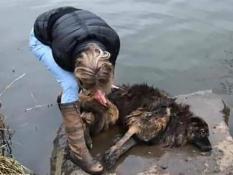 Woman jumped in river to save drowning dog weighted down with rock