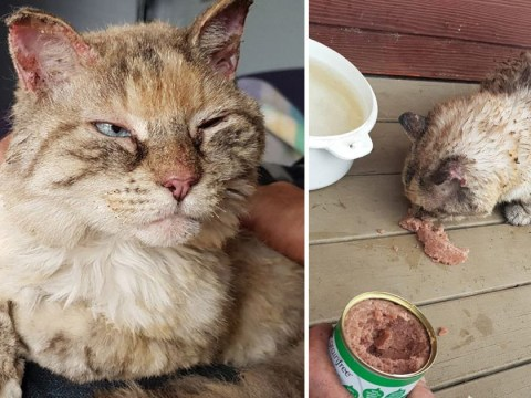 Cat thought to be lost in Australian bushfires returns to family