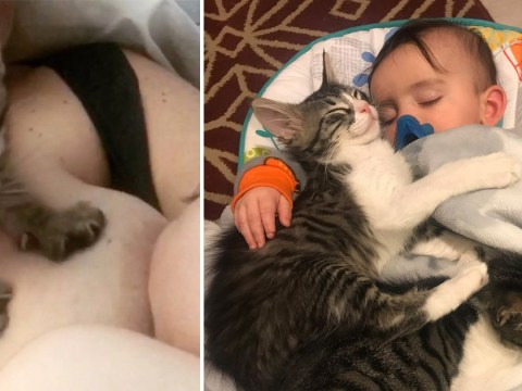 Kitten helps mum by pumping her boob every time she breastfeeds