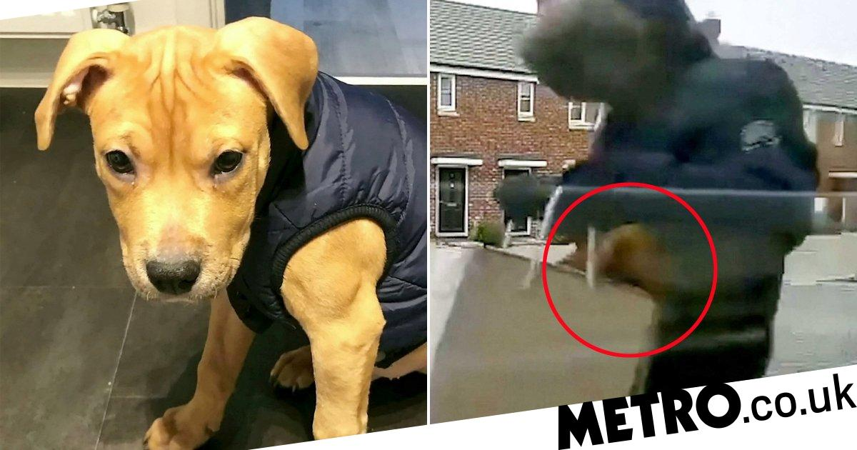 Thief filmed stealing boy's puppy in brown paper bag