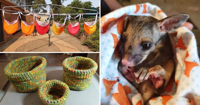 Some of the items made for displaced Australian wildlife
