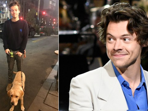 Harry Styles looking after a stranger's dog for them is the pure wholesome content we needed