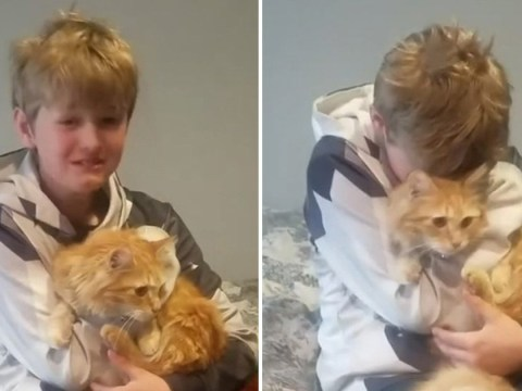 Boy overwhelmed when cat turns up a month after he went missing