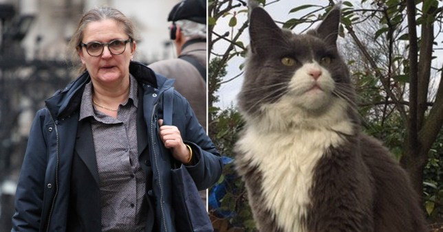 Landscape gardener Nicola Lesbirel was accused of adopting her neighbour's cat Ozzy as her own