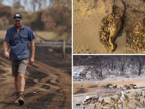 Australian farmer buries 400 sheep after 'apocalyptic' blaze destroys land