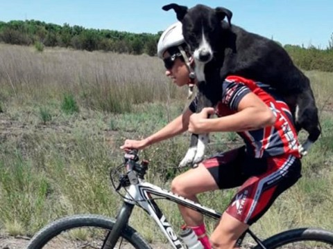 Cyclist stops mid-practice to save dehydrated dog and carry it to town on his back