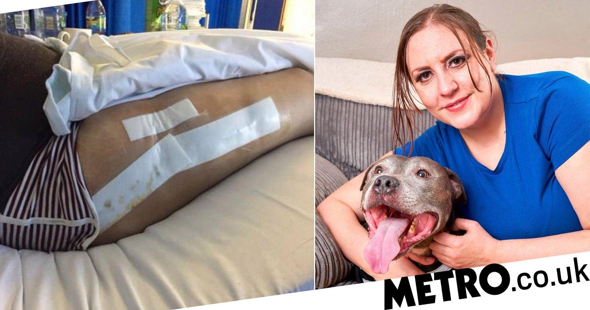 Dog sniffs out tumour the size of a rugby ball in owner's leg
