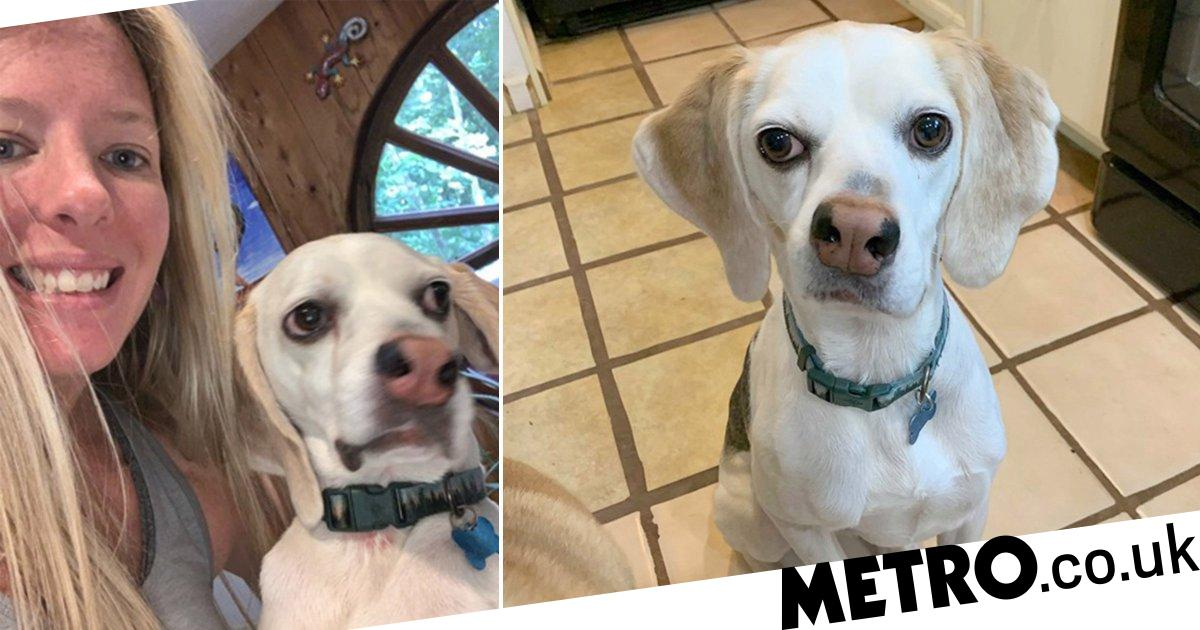 Dog with a wonky nose finds a forever home after three years at the shelter