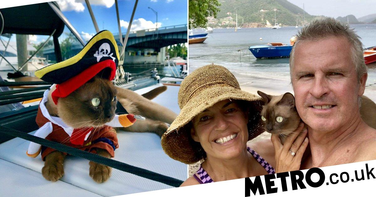 Adventurous cat sails the waters of the Caribbean since she was a kitten