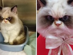 Meow Meow might actually look more furious than the original Grumpy Cat
