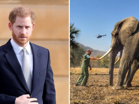 Prince Harry loses complaint over 'drugged and tethered' animal pictures