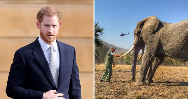 Prince Harry has lost a complaint he made to the press standards watchdog over an article criticising his wildlife pictures