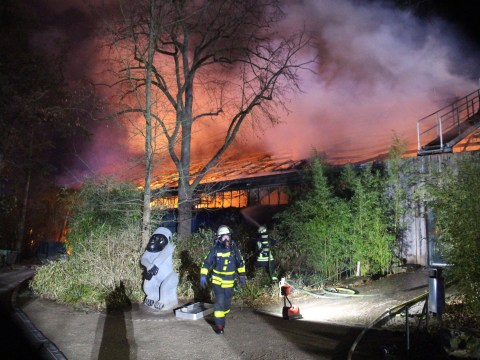 Zoo fire kills dozens of chimps, orangutans and gorillas in Germany