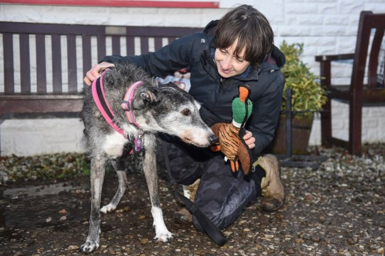 Volunteer Margaret Evans, says goodbye to Doris, the UKs loneliest dog as she heads off to new home.) The UKs loneliest rescue dog has marked 2020 with a fur-ever home - after being taken to the same rescue centre FOUR TIMES in the last six years. Lurcher Doris, 13, desperately needed a new family after her most recent owner, who she had spent four happy years with, recently fell terminally ill with cancer and could no longer look after her. But the unlucky pup was sadly no stranger to staff at Freshfields Rescue Centre in Liverpool, where she was originally abandoned in December 2013, as she has previously been returned there twice more when one family couldn't look after her and another owner died.SEE MERCURY COPY