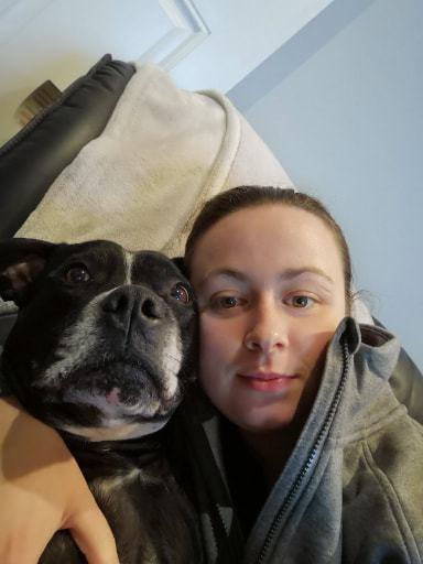 New Year fireworks caused dog to shake so violently his legs are paralysed