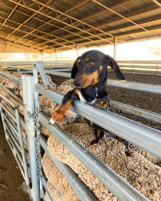 Archie on the farm