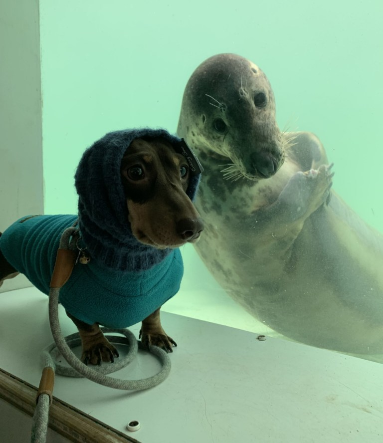 RESCUE SEAL AAYLA SIDLES UP TO SAUSAGE DOG STANLEY, TWO, WITH HER FLIPPERS CLASPED TOGETHER