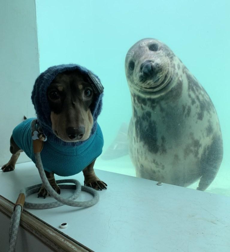 sausage dog stanley and seal aayla pose for pics