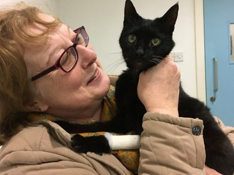 Cat reunites with family after going missing for 12 years