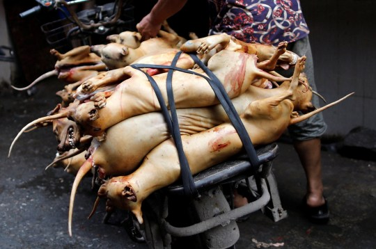 Butchered dogs are transported to a vendor's stall at a market during the local dog meat festival in Yulin, Guangxi Zhuang Autonomous Region, China June 21, 2018. REUTERS/Tyrone Siu - RC188D9440E0