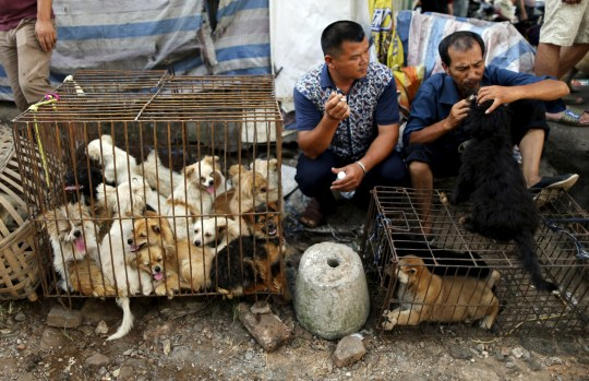 Vendors wait for customers as dogs are kept in a cage at Dashichang dog market ahead of a local dog meat festival in Yulin, Guangxi Autonomous Region, June 21, 2015. In the market, some dogs are sold as pets, while others are sold for dog meat. Local residents in Yulin host small gatherings to consume dog meat and lychees in celebration of the summer solstice which marks the coming of the hottest days for the festival, which this year falls on Monday. REUTERS/Kim Kyung-Hoon - GF10000134712