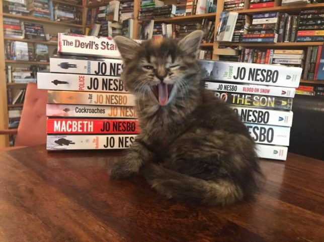 Kitten bookstore
