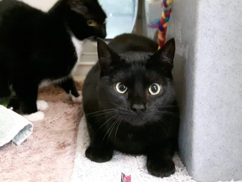 Cats rescued from a house with more than 70 moggies are looking for a home