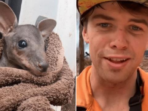 Instagram star films himself saving baby kangaroo from Australia wildfires