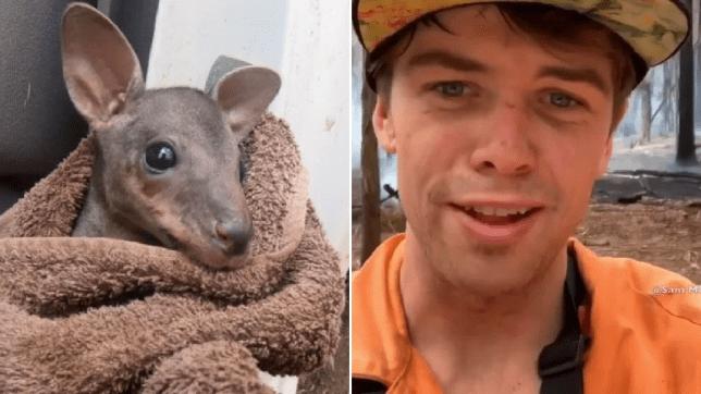 Australian saves baby kangaroo