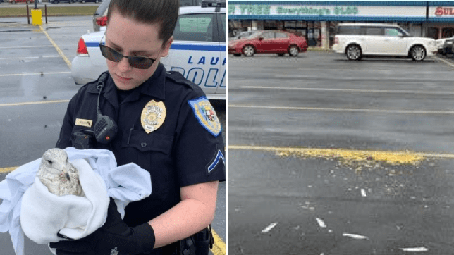 Photo of Laurel Police Department officer cradling injured seagull next to popcorn left out by killer to lure the birds