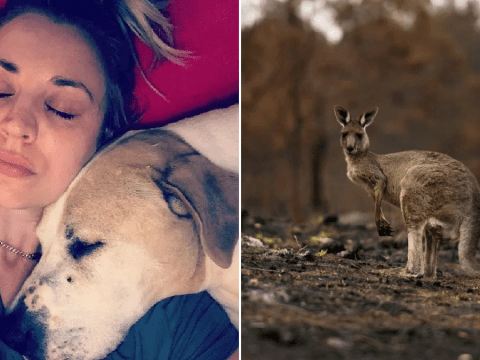 Kaley Cuoco cuddles up to dog Norman as she shares devastation at animals dying in Australian wildfires