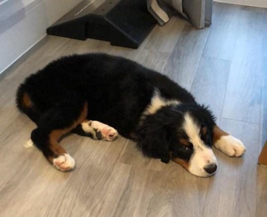 Luna lies on the floor