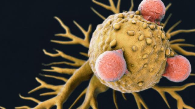 Illustration of the killer T-cell (Photo: Cardiff University)