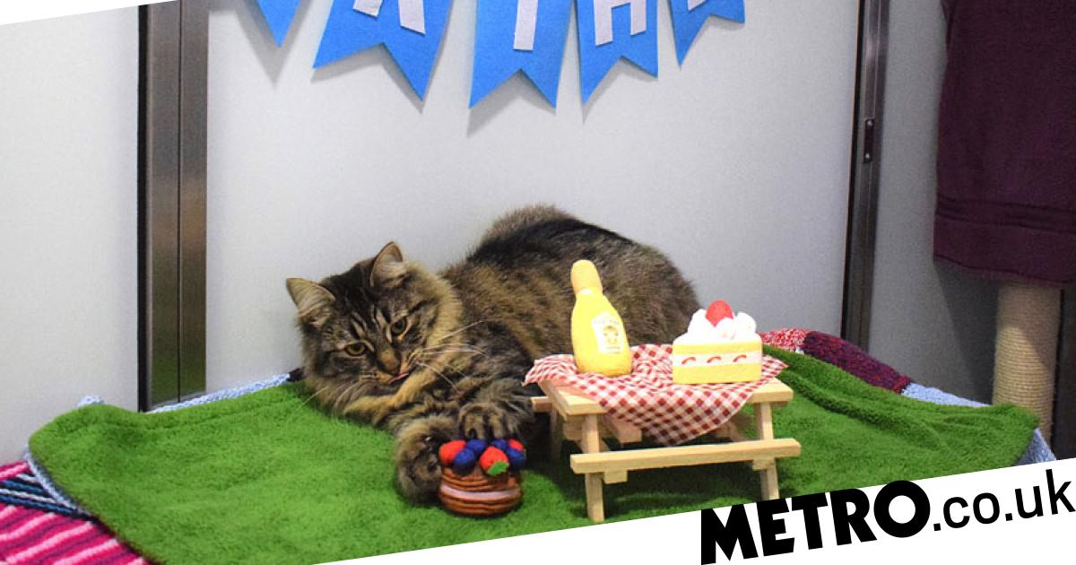Cat looking for a home after no one turned up to her birthday party