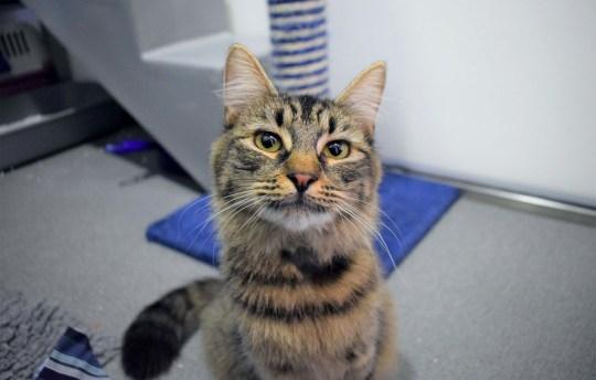 monique the cat at battersea