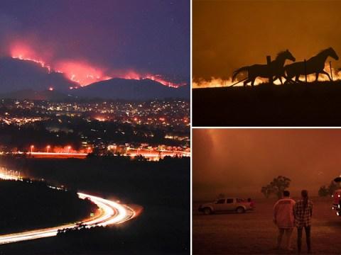 Australian bushfires threaten capital as residents warned it's too late to evacuate